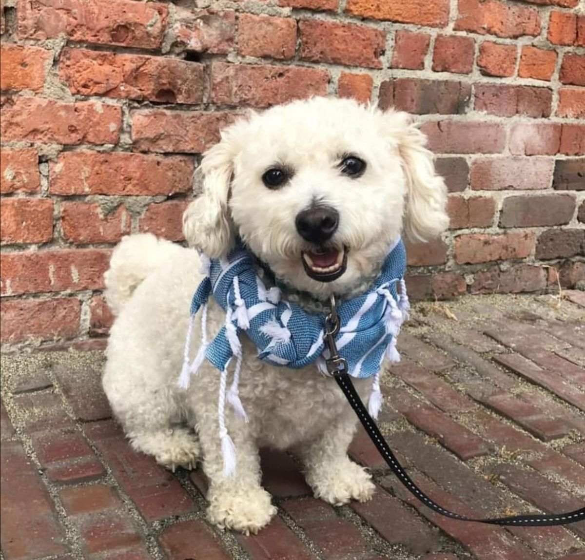 Buddy Towel - Chicko / Royal Blue Stripes